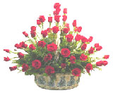 50 Red Roses Arrangement